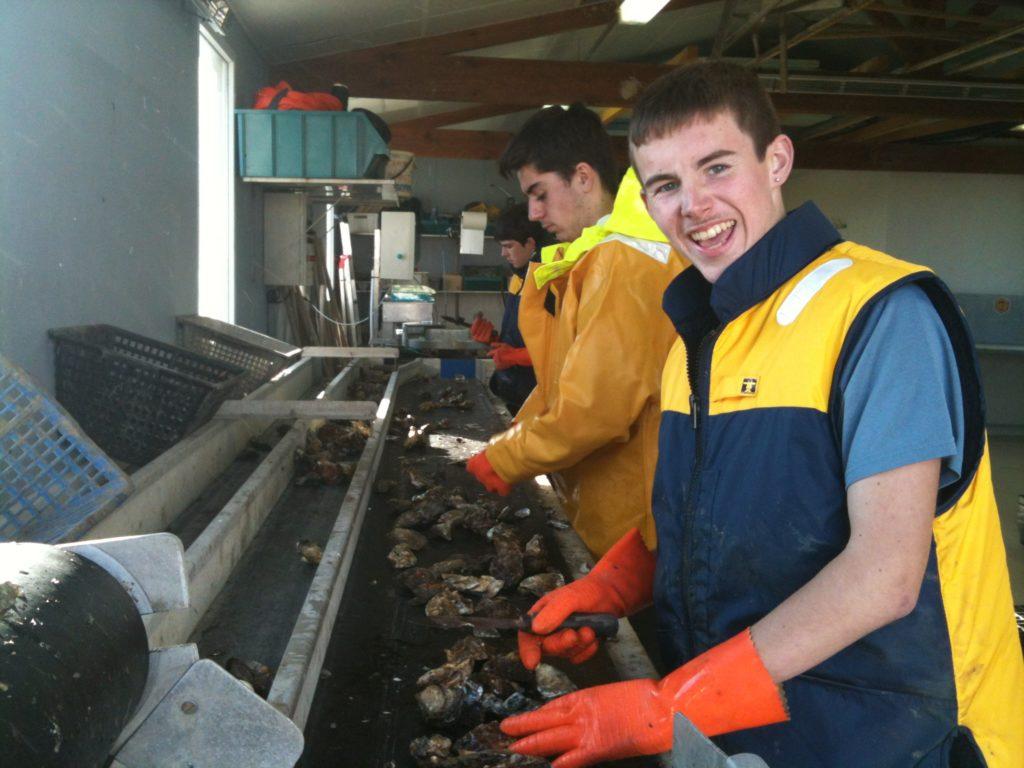Chaîne de tri des huîtres de la ferme pédagogique.